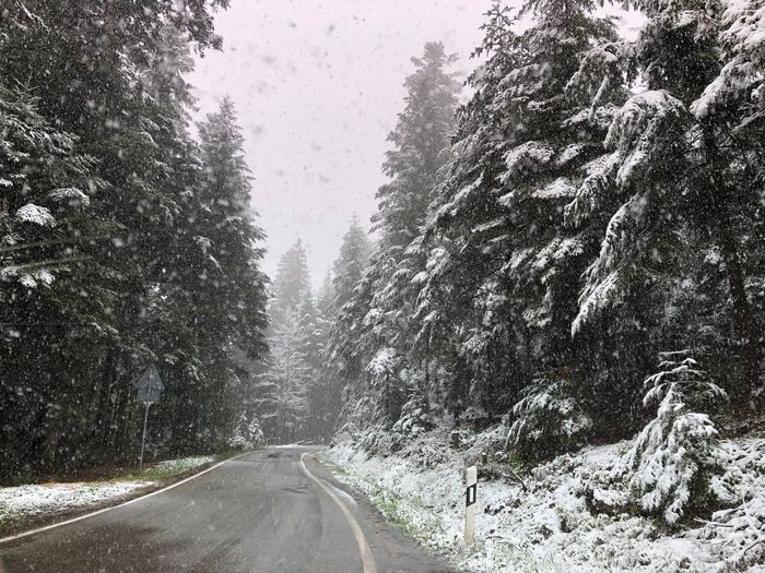 Schnee im Mai 2019 Cold Temperature Snow Plant Winter Road Tree Transportation Nature Forest The Way Forward Snowing Day No People Scenics - Nature Tranquility