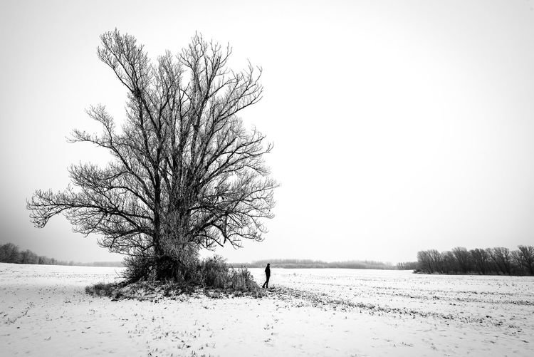 Copy Space Isolated Cold Non-urban Scene Clear Sky Environment Tranquil Scene Tranquility Landscape Scenics - Nature Bare Tree Field Sky Winter One Person Cold Temperature Snow Outdoors Nature Beauty In Nature Plant Land Tree Monochrome Blackandwhite