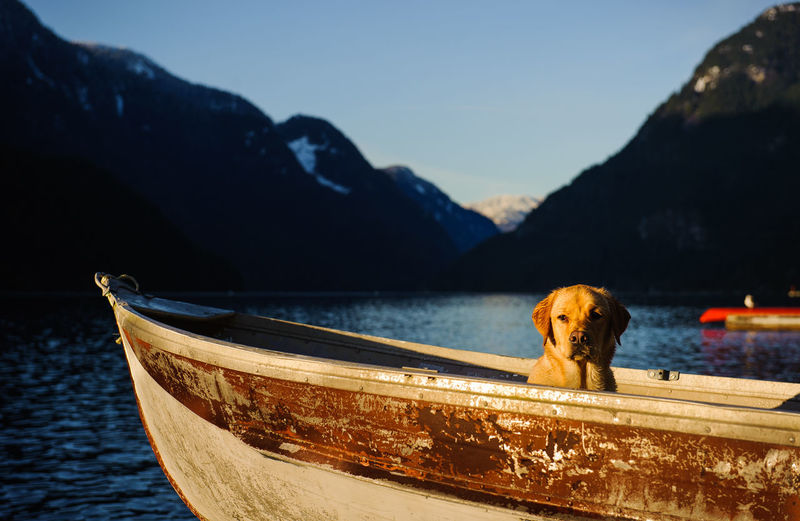 Yellow Labrador Retriever dog Animal Themes Boat Day Dinghy Dog Labrador Retriever Lake Mountain No People Outdoors Pet Tin Boat Yellow Labrador Yellow Labrador Retriever