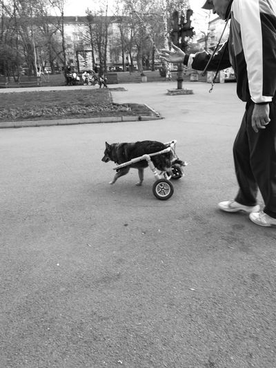 There's Always A Way Street Dog Pets Walking Domestic Animals Blackandwhite Photography Streetphotography Animal Themes One Person One Man Only Injured Dog