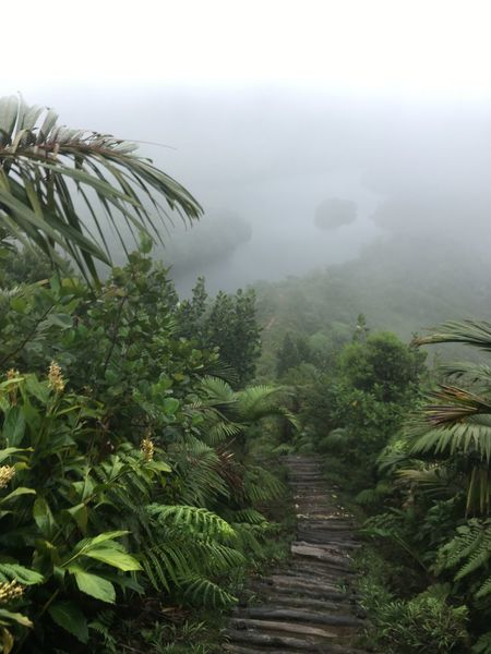 Dominica Beauty In Nature Day Fog Growth Landscape Mist Mountain Nature No People Outdoors Plant Scenics Sky Tranquil Scene Tranquility Tree
