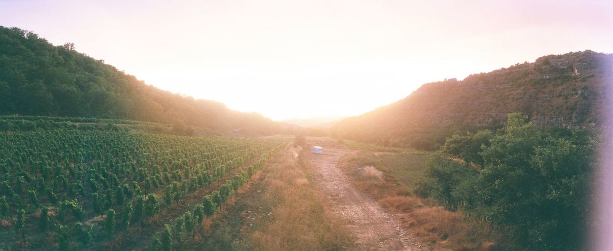 Nature Growth Field Tree Outdoors Beauty In Nature Landscape Scenics Day Sky No People Sun Wine Grapes Ardeche Horizon202 Film
