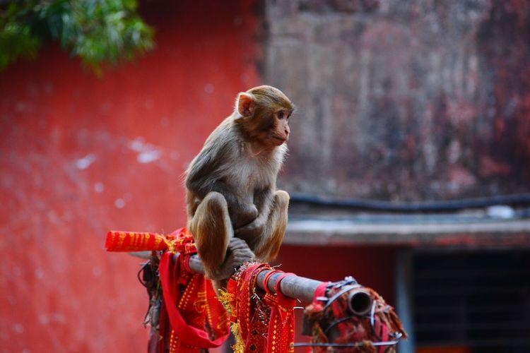 Close-Up Of Monkey Sitting On Wood