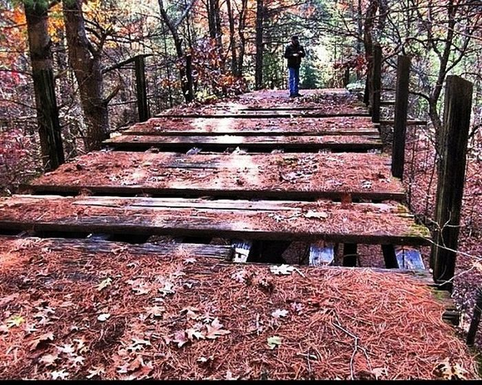 Bridge Eyem Nature Lovers  Nature Chosen Paths