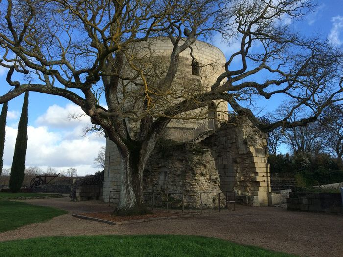 France, Chinon, janeiro/2016 Bare Tree Branch Castle Chinon Day France Nature No People Outdoors Sky Tree