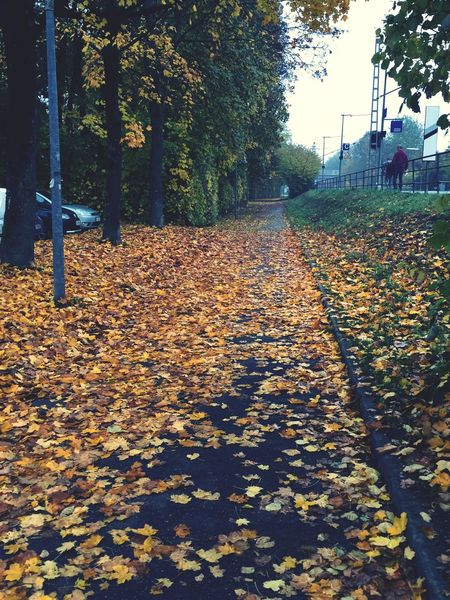 changing colors Autumn Colors