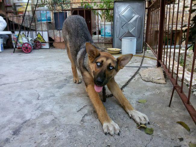 Dog❤ Dogs Dog Love Close-up Dogslife EyeEm Best Shots Animal Capture The Moment Eyes Are Soul Reflection Eyes