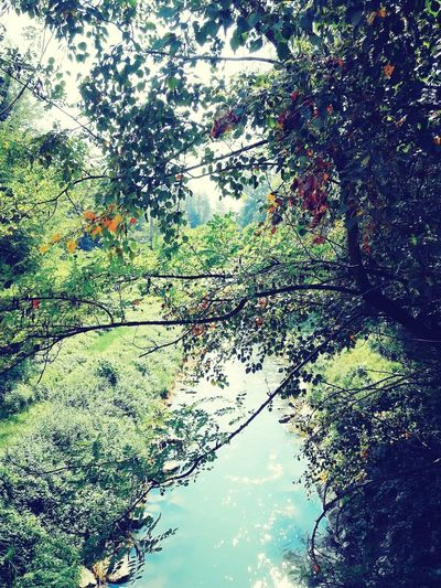 Tree Growth Nature Water Day Outdoors Beauty In Nature Reflection No People Tranquility Green Color Sky Scenics Branch