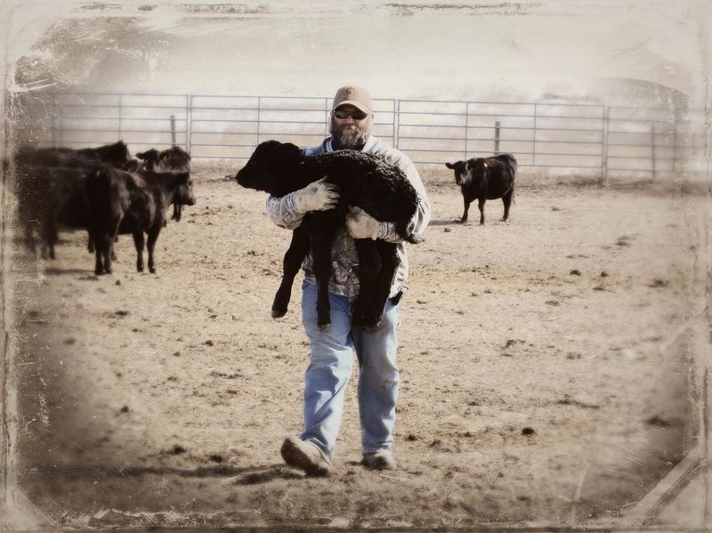 This little heifer was a twin that the mother rejected. Cowboy Ray scoops her up to bring her inside for a warm bottle. Farmers Country Life Colorado Country Living Cowboy Farm Life Cattle