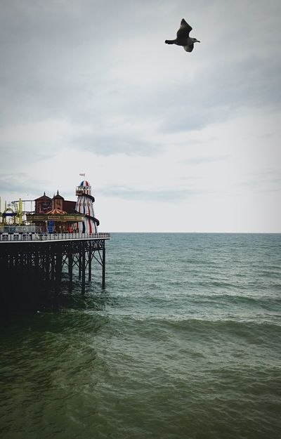 Brighton Sea And Sky Sea Sea View Brighton Pier Seaside Seagull Calm Calm Water Seascape Sea_collection Seagulls In Flight Seascape Photography Seascape #naturelover Pier Rides Helter-skelter Greensea Peace And Quiet Peaceful