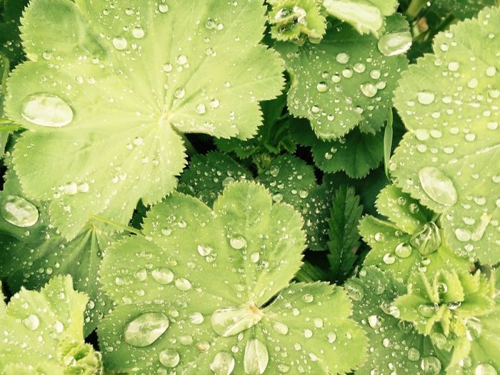 Waterdrops Nature_collection Green Leaves Layersoflight