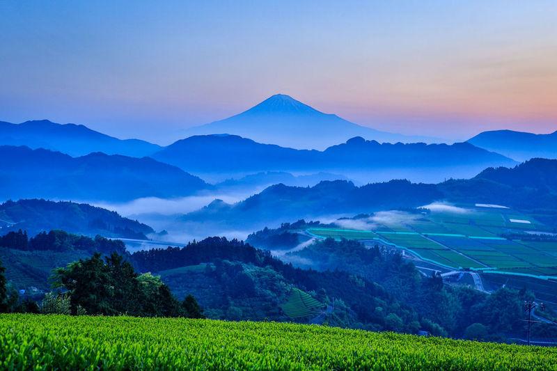 今朝の富士山 Sea Of clouds 富士山 雲海 茶畑 Mountain Irrigation Equipment Rural Scene Agriculture Social Issues Beauty Field Fog