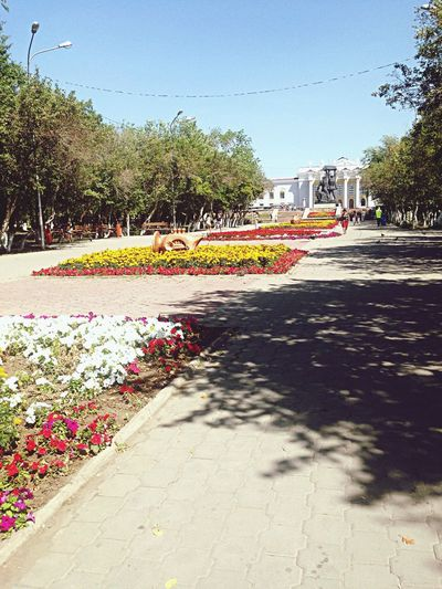City Hot Weather Flowers love my city❤️