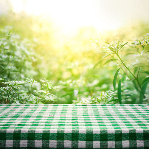 Close-up of fresh green plants on table against bright sun