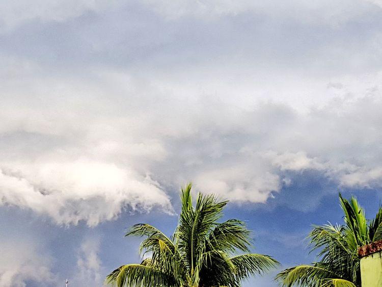 Tsunami in the sky... Tree Sky Cloud - Sky Palm Tree No People Nature Low Angle View Treetop Outdoors Beauty In Nature Storm Cloud Day Storm OEstranhoMundoDePaulinhoAguiar Céu Céu E Nuvem Céus E Nuvens Palm Tree Nuvem Chuva Chuvadeverao Rain Cloud_collection  Clouds Cloudy Sky