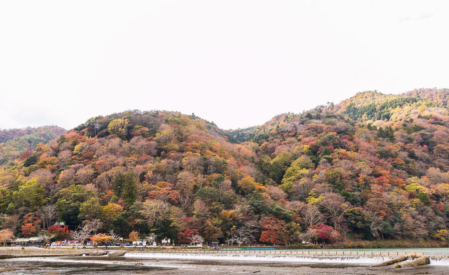 Arashiyama Autumn Beauty In Nature Clear Sky Day Mountain Mountains Nature No People Outdoors River Scenery Scenics Sky Tree Water Waterfront
