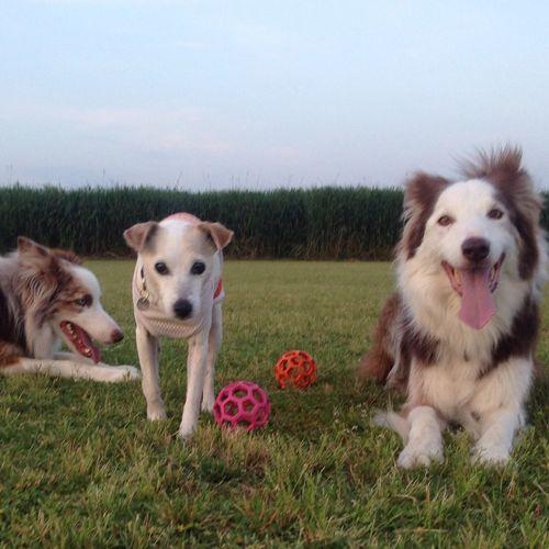 My Puppies ❤ Jrt Betty , Bc Rod and Sean  First Eyeem Photo Dog