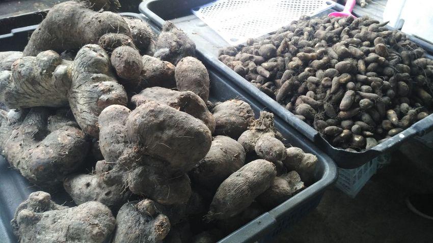 Ubi Badak Ubi Keling Tubers Dioscorea Market Raw Food Market Stall Fresh Produce Fresh Vegetables Outdoor Healthy Eating