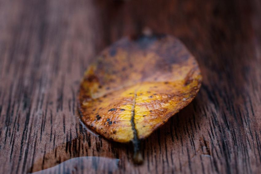 Wood - Material Close-up No People Autumn Table Nature Macro Showcase: November Tenebrio.photos Zeiss60mm Textured  Insect Day Animal Themes Outdoors Freshness Maximum Closeness