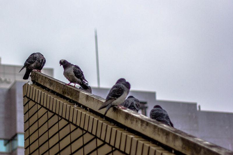 Animal Themes Bird Low Angle View