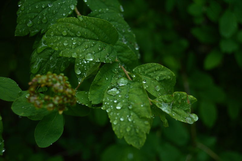 :P EyeEmNewHere Leaf Plant Part Drop Growth Green Color Plant Water Wet Close-up Beauty In Nature Nature Freshness No People Leaves Day Focus On Foreground Rain Outdoors Dew RainDrop Rainy Season Purity