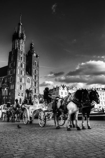 Animal Themes Architecture Beauty Building Exterior City Cracov Day Domestic Animals Eye4photography  EyeEm Best Shots Horse Horse Cart Horsedrawn Mode Of Transport No People Outdoors Poland Sky