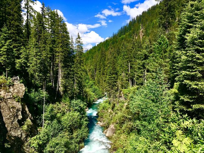 One Way Hidden Path Small River In Forest River Mountain Sommer Sankt Anton Am Arlberg Plant Growth Green Color Tree Nature Sunlight Beauty In Nature Day Sky No People Tranquility Scenics - Nature Land Outdoors Cloud - Sky Tranquil Scene Sunny Low Angle View The Great Outdoors - 2018 EyeEm Awards