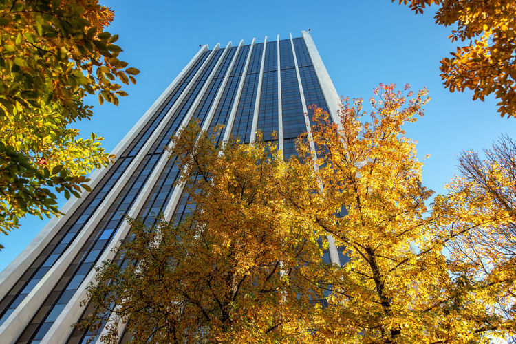 Skyscraper and tree with beautiful yellow autumn foliage in Portland, Oregon Portland Oregon Travel Travel Destinations Tourism Pacific Northwest  Autumn Autumn colors Fall Fall Colors Skyscraper Low Angle View Sky Built Structure Architecture Nature Clear Sky No People Building Exterior Day Outdoors Building Tall - High Office Building Exterior Tree Plant Change Growth Branch Leaf