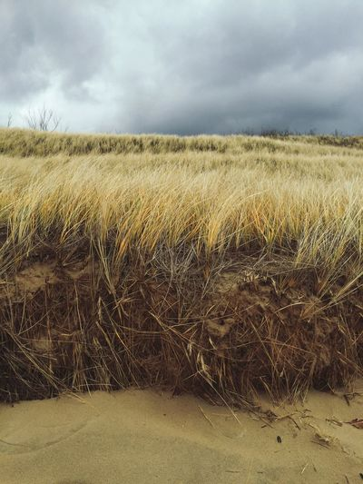 Beach grass and sand on cloudy day in Michigan Beach Michigan Portrait Sand Cloudy Beach Beach Grass EyeEm Selects Landscape Sky Tranquility Nature Outdoors Cloud - Sky Scenics No People Tranquil Scene