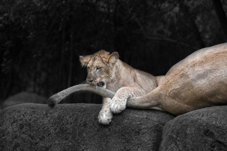 Cat resting on rock