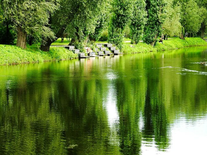 Water Tree Reflection Waterfront Green Color Lake Day Beauty In Nature Nature Green Majestic Walking Around Battle Of The Cities Tavrichesky Garden Motion Colors Of Sankt-Peterburg Sankt-Petersburg Russia