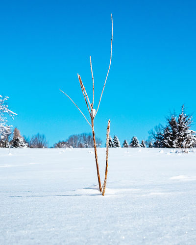 Bare tree on snow covered landscape against blue sky
