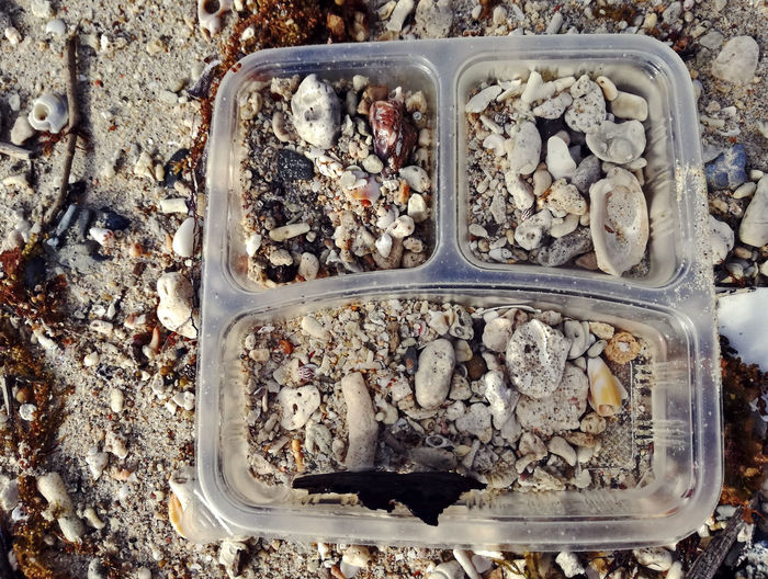 Sea Stone, Seashells By The Sea Shore Sea Sea Stones Seashell Seashell, By The Sea Shore Sea_collection Seashells, Sand And Water Seastone