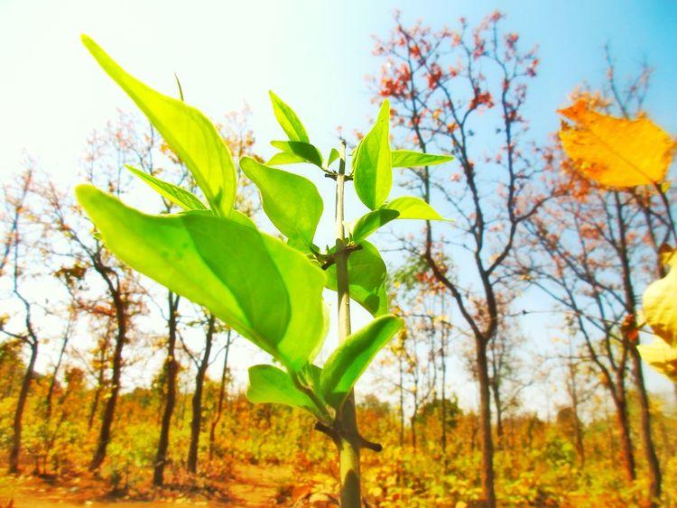Tree Branch Rural Scene Leaf Multi Colored Autumn Sky Close-up Plant Landscape