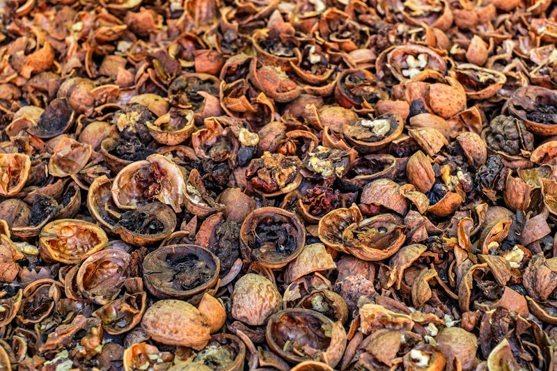 Cracked nuts infected with mold Bad Condition Mold Nuts Abundance Backgrounds Bad Close-up Corupted Cracked Day Decayed Defaced Food Food And Drink Freshness Full Frame Healthy Eating Infected Large Group Of Objects Mildew Mold Food Mold Mould Mouldy Nature No People Nuts And Seeds Nuts On The Ground Nutshell Outdoors Putrid Rotten