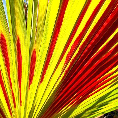 Full frame shot of colorful flower