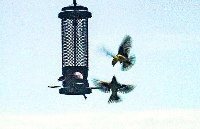 Aerial combat Animals In The Wild Animal Animal Themes Animal Wildlife Group Of Animals Bird Bird Feeder