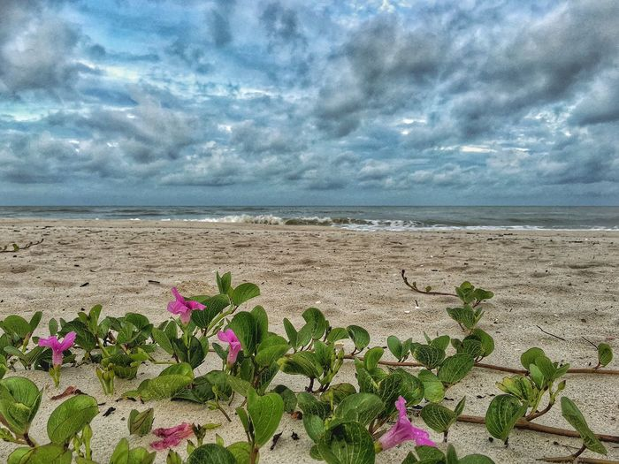 Flower Beach Beauty In Nature Horizon Over Water Sea Scenics Freshness Nature Tranquil Scene Cloud - Sky Petal Water Shore Sky Fragility Sand Growth Tranquility Cloudy Cloud