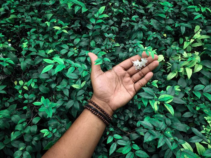 Seek Texture Background Backgrounds Texture Shape Flower Human Hand Hand Human Body Part Green Color Personal Perspective One Person Real People Body Part Plant Lifestyles Nature Finger Growth Human Finger Day Unrecognizable Person Touching High Angle View Leaf Outdoors