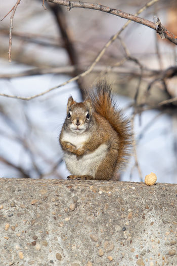 Portrait of squirrel sitting on branch