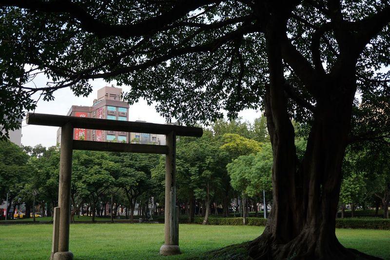 林森公園 Taipei Tree Plant Nature Park Grass No People Green Color Architecture Outdoors