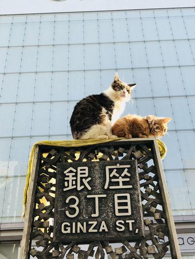 小貓兩三隻,第三隻住在你心裡