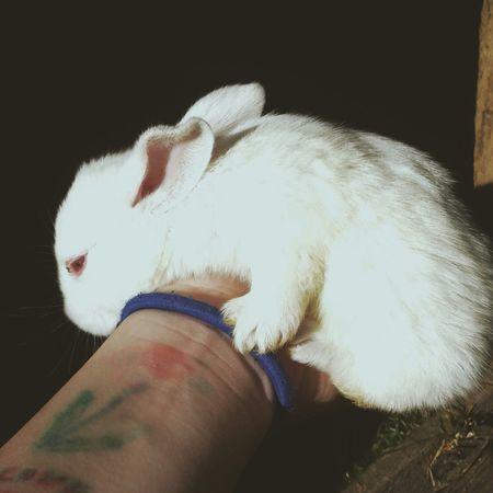 лапуля кролик белый и пушистый