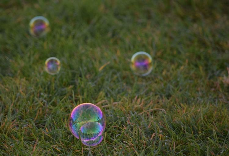 Bubbles on grassy field