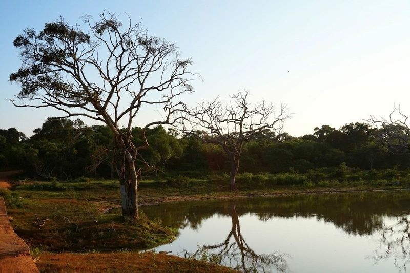 Safari Yala National Park Sri Lanka Nature Lake