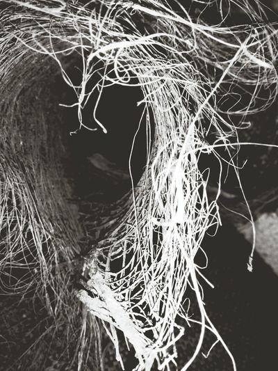 Doku Ağaç Kabuğu Palmiye Eye4black&white  kalbi gören ? :)