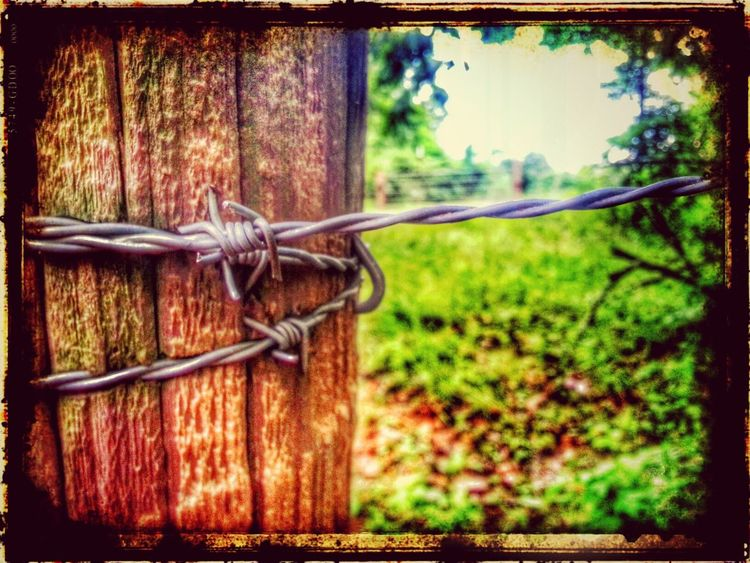 hope everyone has a happy Barbed Wire Wednesday Barbwire Wednesday Barb Wire Snapseed