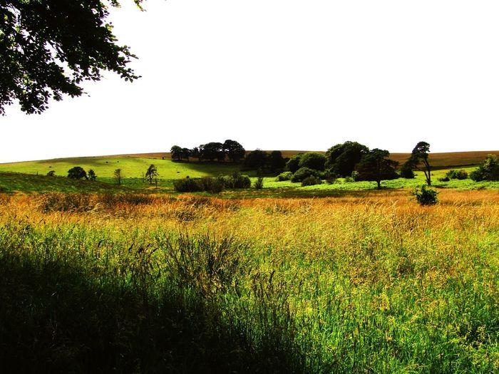 Medow Walk Nature On Your Doorstep Nature Grasses In The Wind Summer Memories 🌄 Mendip Hills Light And Shade Hill Tree Natural Light And Shade Light And Dark Spaces