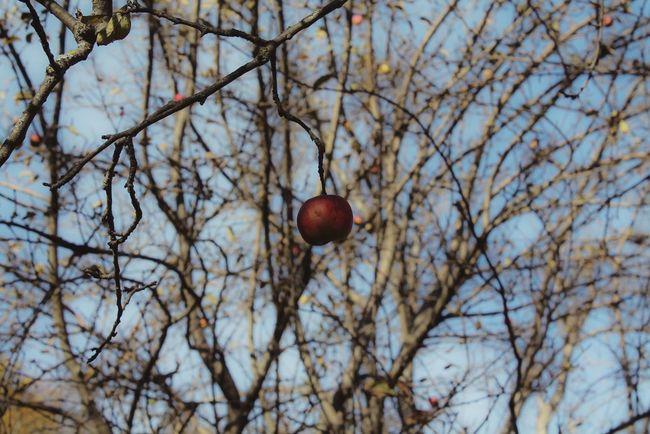Apple Tree Sky EyeEm Best Shots EyeEmBestPics