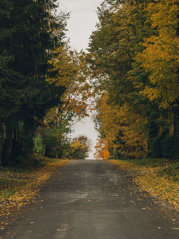 autumn in the country Autumn Autumn Colors Cloudy Light Autumn Beauty In Nature Change Day Growth Landscape Leaf Nature No People Outdoors Road Scenics Sky The Way Forward Tranquil Scene Tranquility Tree Yellow